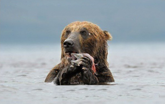 Медведям и медведицам посвящается