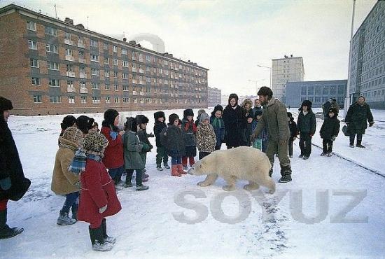ГМК - нашествие кровожадных белых медведей на Норильск!