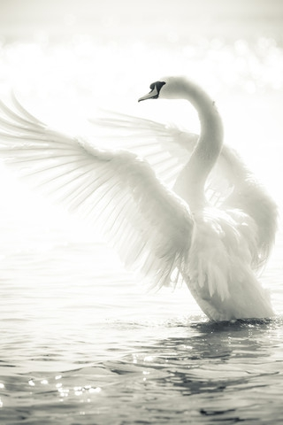 Белый лебедь. часть 2