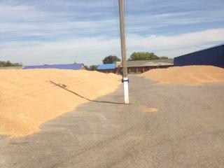 Пшеница США: спекулянты остановили рост рынка