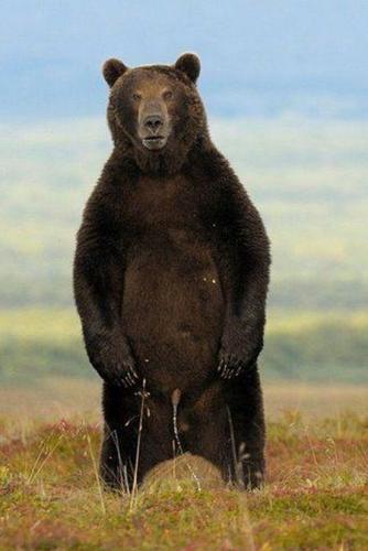 dead bear bounce?