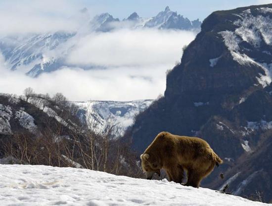 Медведь не выдержал...