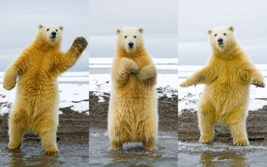 Танцуем господа :)