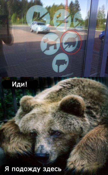 с медведями нельзя