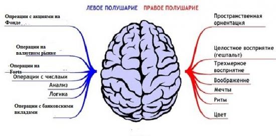 Мозг и трейдинг
