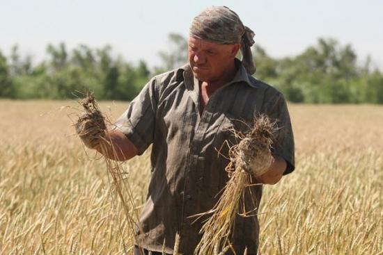 Пшеница на пике с сентября прошлого года!!! Рост продолжится?