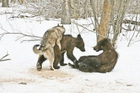 Рынок бычий или медвежий?....Волчий!)))