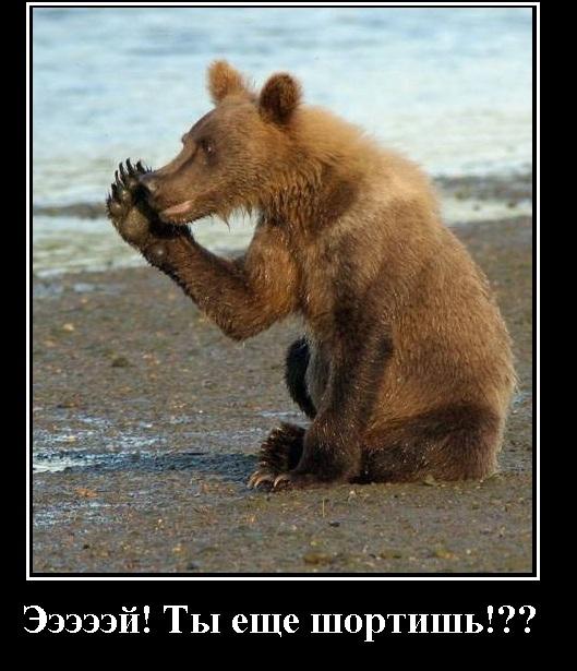 Медведи негодуют ...