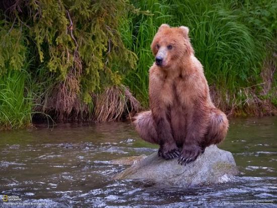Медведи перекличка