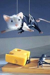 Крыса в тумане или один день из жизни