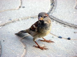 Трейдеры как птицы...