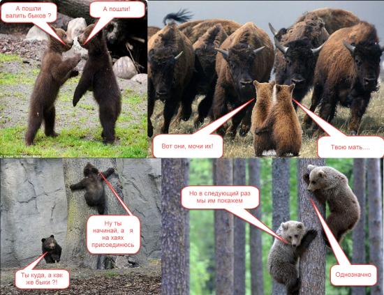 Тактика торговли. Американские медведи.