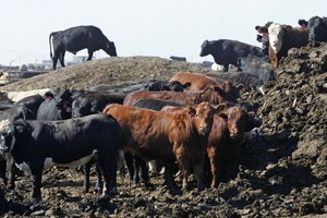 Фермеров в Казахстане обложат налогом на навоз