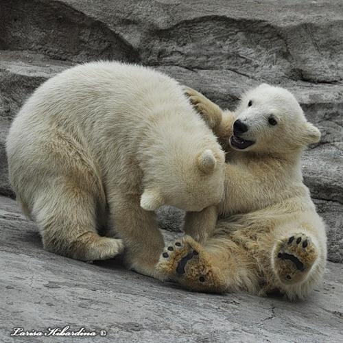 Давно такого не было Газпром -3% Сбер -4% просто радость для медведей!