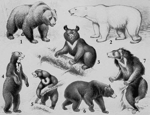 Research 25/06/2012: Где пасутся медведи?!
