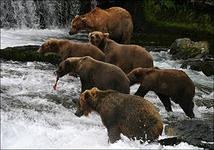 на смарт-лабе живут одни медведи?