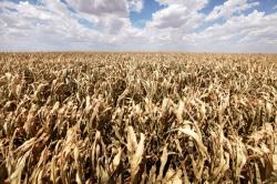 США: цены на продовольствие будут расти