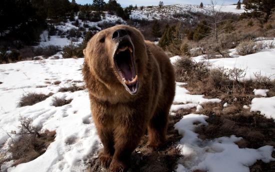 *** А вы всё ещё ждёте рост индексов? Тогда злая медведица уже идёт к вам ***