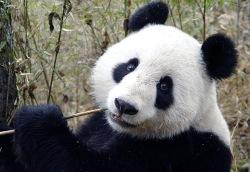 Китай: власти фальсифицируют показатели для сокрытия масштабов трагедии