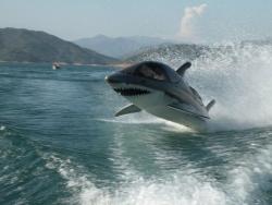 Ныряющий катер-акула
