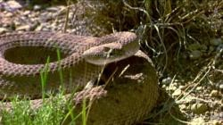 Джефф Гундлах: рынки 2013 года подобны змее