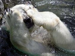 Рынок акций США. Расстройство для «медведей»