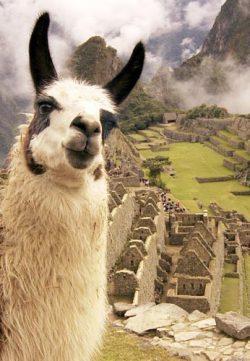 Перу - Мекка фальшивых долларов