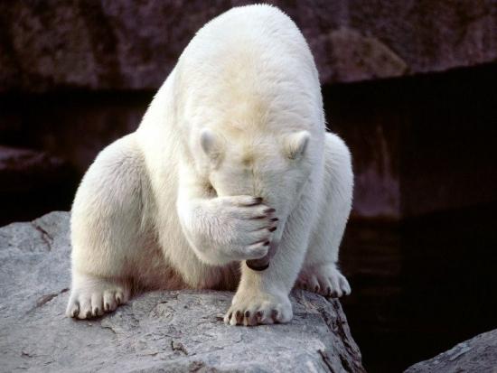 Медведи разозлились