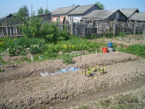 Россияне будут больше питаться с огорода