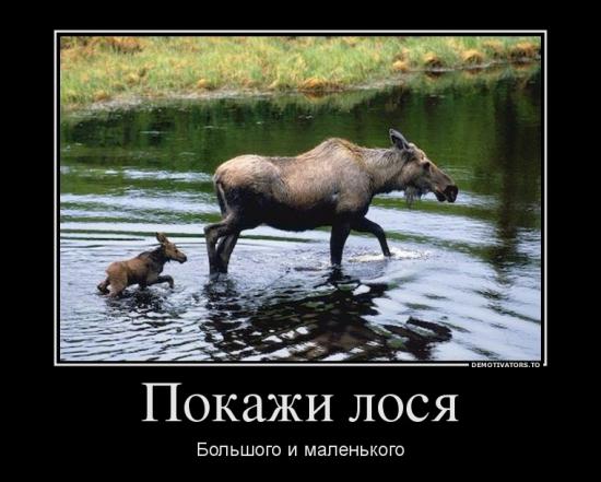 Покажи...лося