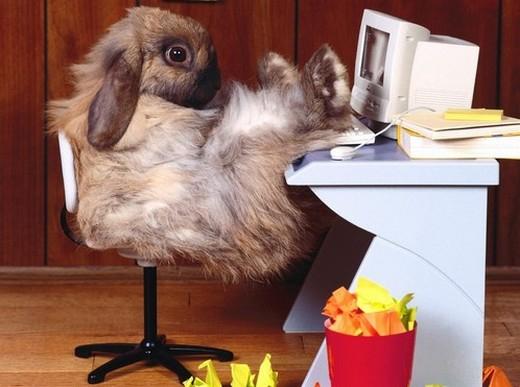 Успешный трейдер из Песни про зайцев...