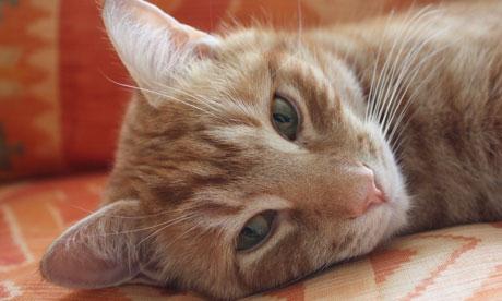 Британский кот обогнал аналитиков по точности финансовых прогнозов