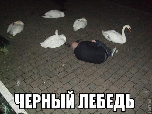 Черный лебедь (Юмор)