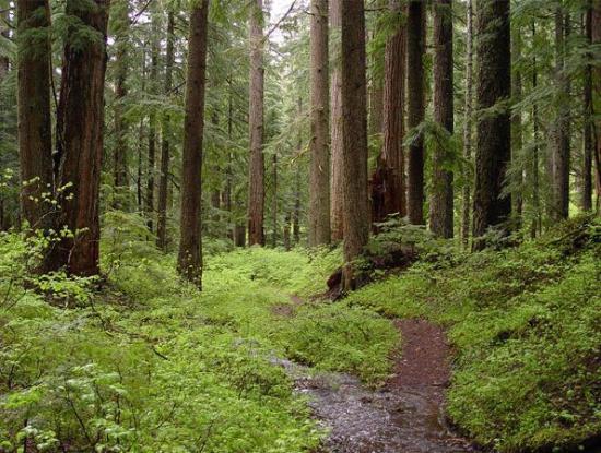 Лесные угодья для детей, наследующих деньги