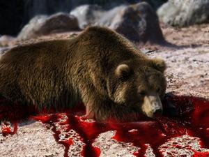 Убийство медведя