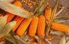 Рынок кукурузы – победа потребителя или фермера?