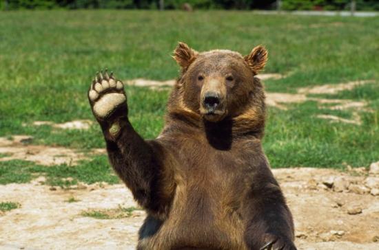 Привет медведь.
