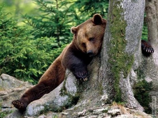 Ситуация на рынке !! Укротитель прогнал медвежат =)))Всем Армагидо аналитикам привет !))