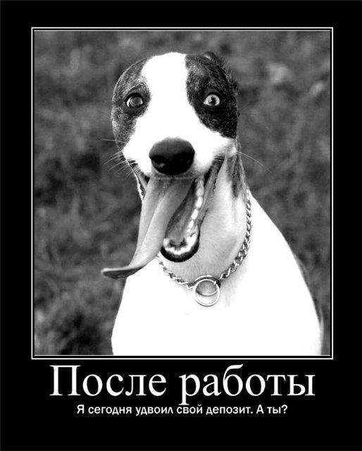 Юмор на канале РБК. Избранное :)