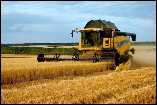 В Крыму урожай ранней зерновой группы в этом году уже превысил прошлогодние показатели в 2,5 раза