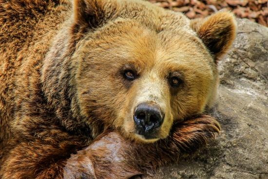5 причин начала медвежьего рынка