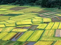 Возможности глобальных инвестиций в сельхозкультуры