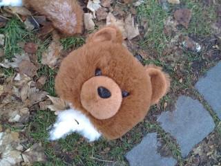 Время надрать зад медведЯм