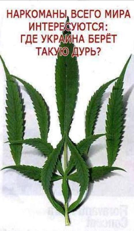 О зелёных ростках в украинской экономике , без жулиных бла,бла , бла ...