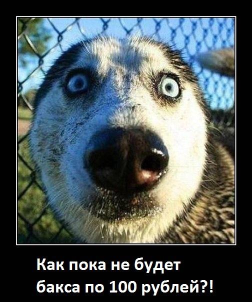 """Мячтателям """"100рэ за бакинский"""" - мечтать не вредно, но делать это лучше вовремя"""