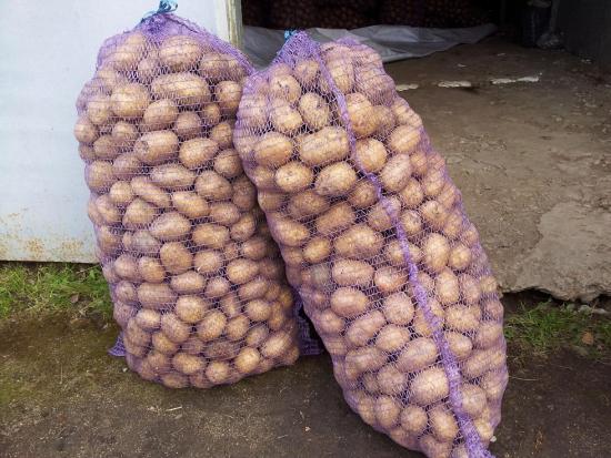 Картофельный стартап