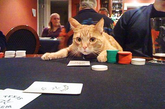 Можно ли играть в интернет казино