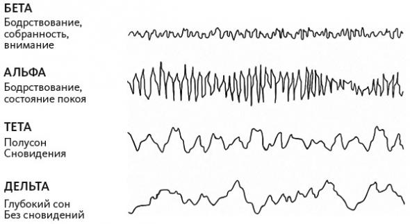 Нейрофитнес. Рекомендации нейрохирурга для улучшения работы мозга. Рахул Джандиал.