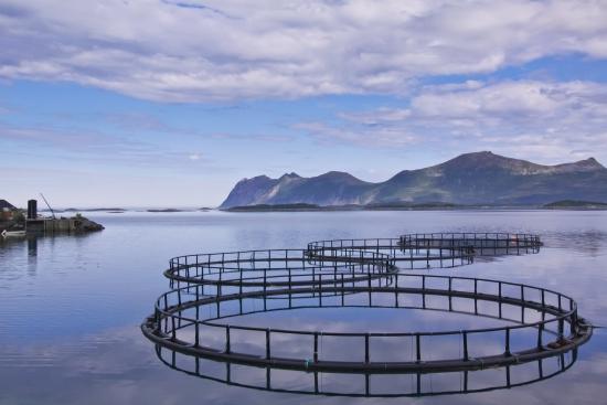 Рыбоводство России (аквакультура)