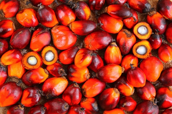 Пальмовое масло в России, США, Европе